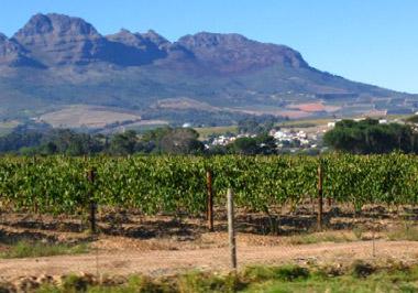 南非葡萄酒重要产区