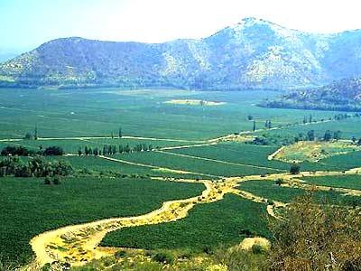 澳大利亚葡萄酒分为四大产区,分别是南澳,新南威尔士,维多利亚(包括塔